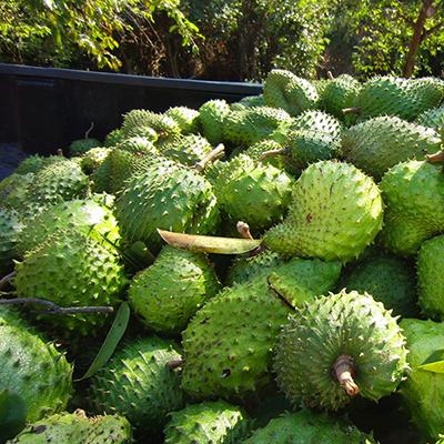 green fruit_CIMG9844_400SQ