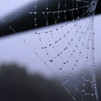 spiderweb800SQ